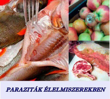 paraziták az élelmiszerben detoxic progressive
