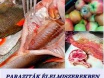 Milyen betegségeket okoznak a paraziták?