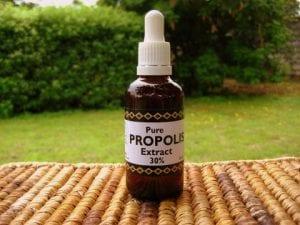Candida ellen propolis