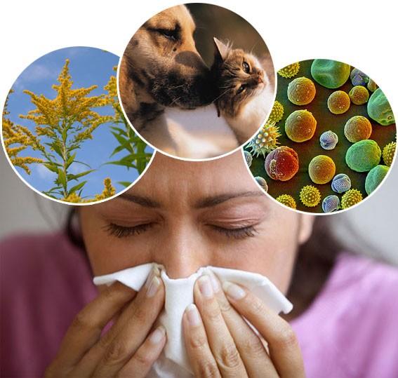 A B- vitaminoknak is nagy szerepük van az allergia leküzdésében. Tanulmányok kimutatták, hogy a niacin (B3 vitamin) különösen hasznos a szezonális allergia, valamint a pollen allergia ellen. http://testunk.e-goes.com/betegsegek-tunetei/allergia/ A panthothenic sav (B5 vitamin) is bizonyítottan csökkenti az olyan allergiás tüneteket, mint orrdugulás és tüsszögés. B6-vitamin hasznos lehet az emberek számára aki msg (MSG: nátrium-glutamát -más néven MSG, mononátrium-glutamát vagy E621- a glutaminsav nátriummal alkotott sója. Az egyik legáltalánosabban alkalmazott élelmiszer-adalékanyag.) és azoknak akik nem tudnak kínai ételeket enni.