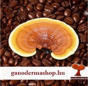 Ön milyen kávét iszik? A ganodermás gyógykávé hatásai