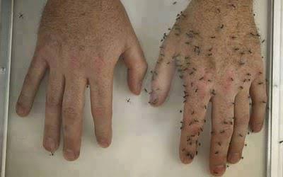 Szúnyogriasztó kenőcs házilag