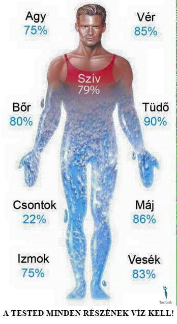 igyon sok vizet fogyni vagy fogyni
