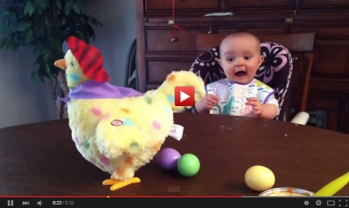 Húsvéti tojást tojó tyúk