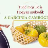 """HCA zsírégető A Garcinia Cambogia Veda növeli a szerotonin (az ún. boldogság hormonok) szintjét a testben, így segít kordában tartani a bánat-evést és jobb hangulatot és alvást eredményez. A HCA hatással van a stressz hormonokra (kortizol, vagy """"rossz hormon""""). Az alvás pihentetőbbé válik és egyre kiegyensúlyozottabb leszel. A HCA elnyomja az étvágyat, elejét veszi a zsírlerakódásnak és küzd a yo-yo hatás ellen. A Garcinia Cambogia Veda is tartalmaz, ami egy energia-forrás és segít az extra zsírpárnák égetésében."""