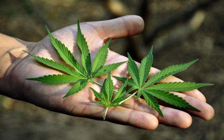 marihuána hatásai