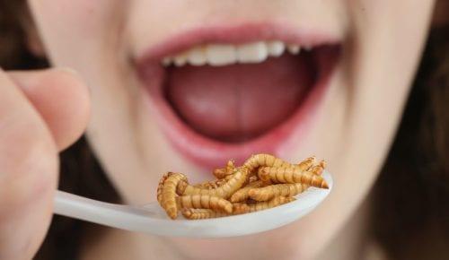 ROVAREVÉS: Ehető rovarok az táplálkozás fejlesztés irányadói.