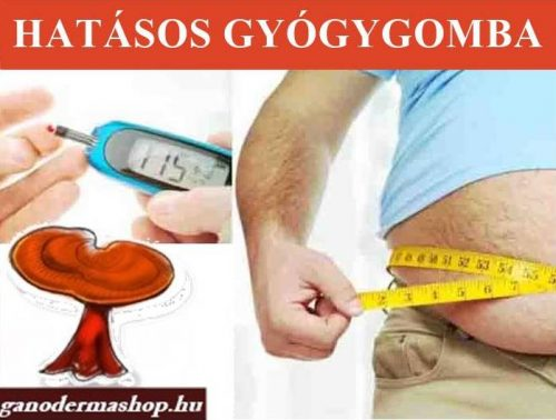 A gínoderma gyógygomba segít a cukorbetegség tüneteinek enyhítésében