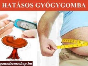 A ganoderma gyógygomba segít a cukorbetegség tüneteinek enyhítésében